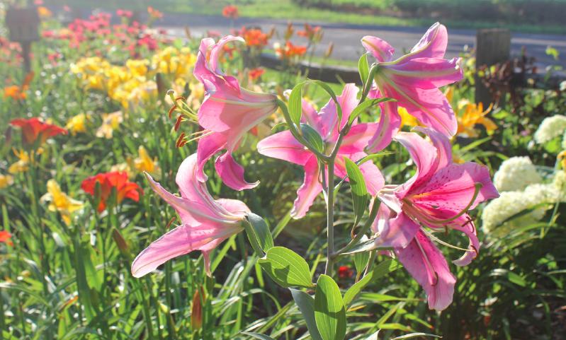 U Ave flower