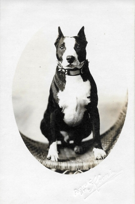 Dogs sat for portraits, too, like this local hound photographed by Koons.