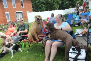 The Fulton Memorial Day parade annually draws a large crowd including these big dogs who were caught jockeying for the best seat at the parade on a very hot day.