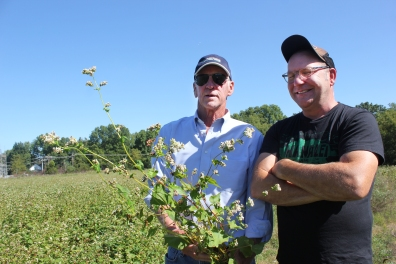 "Rob Richardson and John Kern examine the pollinator plot on 80 acres on the west side of the Mill that his farm team planted to buckwheat and sunflowers in mid-July. ""We got good germination with the goal being to flower when school starts so the classrooms in ag science could do field study. The buckwheat is used to outrace the weeds,"" he said. ""I'm excited as this is the type of farming I don't get to do much of the time. We can use the buckwheat rather than a herbicide to control the weeds."""