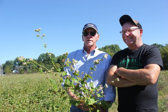 """Rob Richardson and John Kern examine the pollinator plot on 80 acres on the west side of the Mill that his farm team planted to buckwheat and sunflowers in mid-July. """"We got good germination with the goal being to flower when school starts so the classrooms in ag science could do field study. The buckwheat is used to outrace the weeds,"""" he said. """"I'm excited as this is the type of farming I don't get to do much of the time. We can use the buckwheat rather than a herbicide to control the weeds."""""""